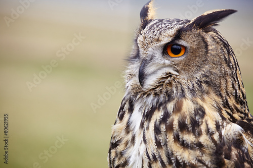 Deurstickers Uil Eagle Owl/An eagle owl