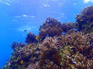 サンゴと小魚達