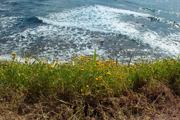 Background sea with yellow flower