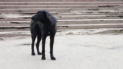 Black Dog homeless on the street asks passers food