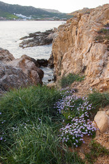 Beautiful violet flowers and green grass on the beach of the isl