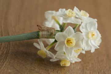 White and yellow narcissus flowers detail, on wooden background
