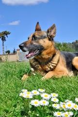 Cane nell'erba in primavera