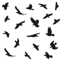 Eagles flying silhouettes, vector illustration