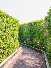 Green Leaves Wall with footpath