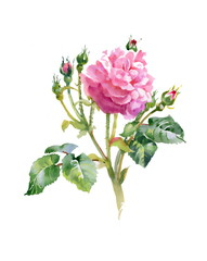 Pink rose bud with green leaves