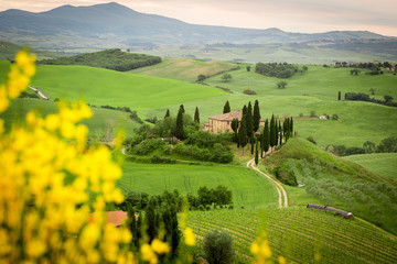 Tuscany, landscape and farmhouse in italy, yellow flowers