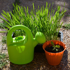 Garden plants and watering can.