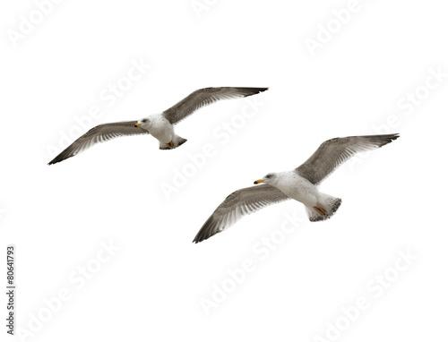 Foto op Aluminium Vogel Zwei Möwen