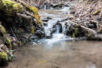 Waldbach / Stream