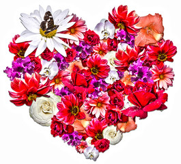 Beautiful heart made of different flowers on white background