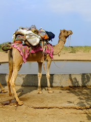 Camel standing by water reservoir in a small village during came