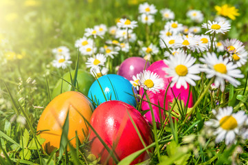 Colorful Easter eggs lying in the grass with daisy flowers