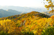 Top of the Great Smoky Mountains in fall. - 80643948