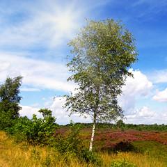 Sommer in der Heide
