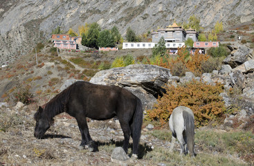 Monastery and the horses