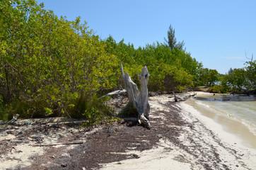 Spiaggia (Yucatan)