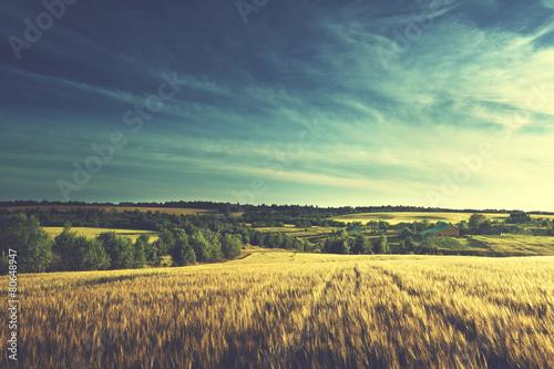 Leinwanddruck Bild wheat field in sunset time (vintage toned style)