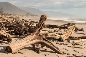 driftwood on West Coast beach in South Island, New Zealand