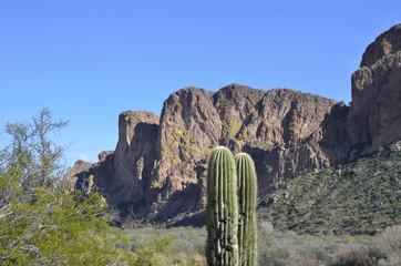 Telltale Cactus