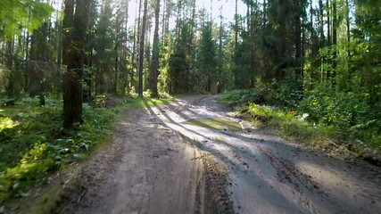 POV shot of cyclist riding through sunny summer forest