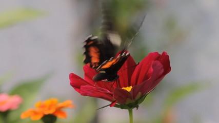 Butterfly on a flower in garden