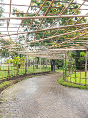 Bamboo roof for vine creeper plant