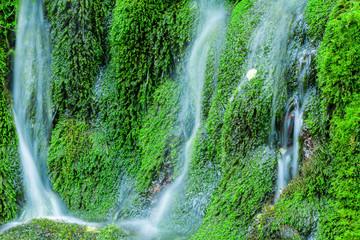 苔の岩と清水