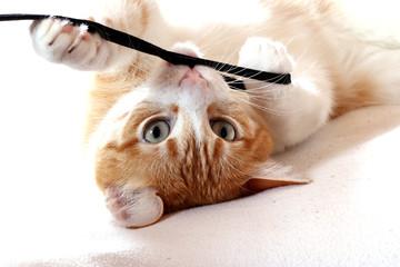 Katze spielt über Kopf, Bild für Katzenkalender