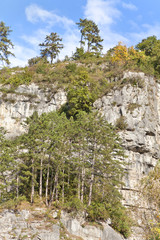 trees growing on rock