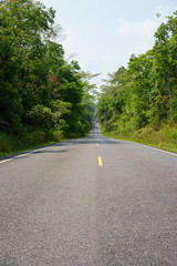 Forest road at Khaoyai National Park (The World Heritage of natu
