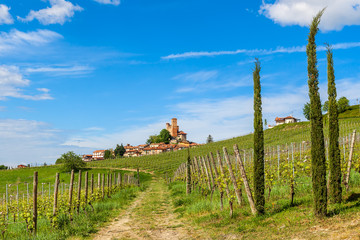 Rows of vineyards and small town in Italy.