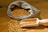 Getreidekörner vom Hafer