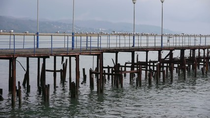 Sea Gulls on Old Wood Pier