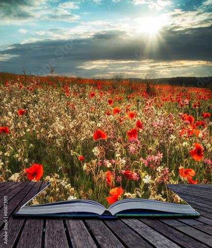 Fototapeta Stunning poppy field landscape in Summer sunset light conceptual