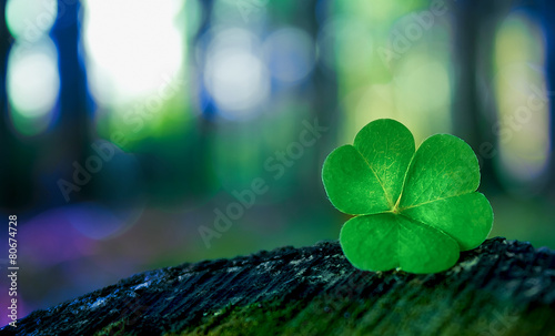 Poster Planten Shamrock in forest