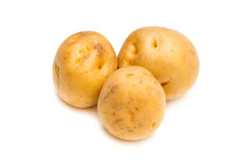 ジャガイモ-Solanum tuberosum