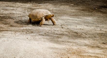 Tortoise outdoors