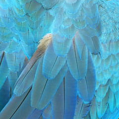 Colorful feathers, feature as background texture.