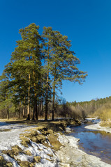 весенний лес на берегу реки, Урал, Россия