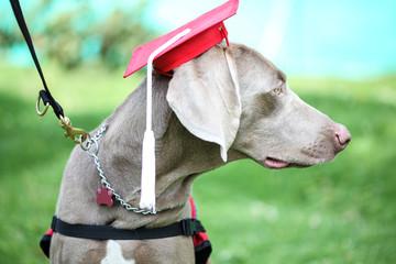 Graduación canina