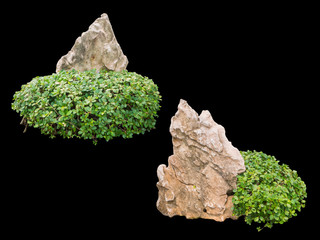 Rock and bush for gardening isolated