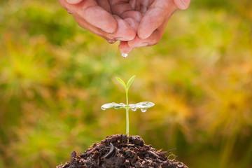 Hands of men watering the seedlings of trees.