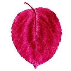 Лист дерева малинового цвета