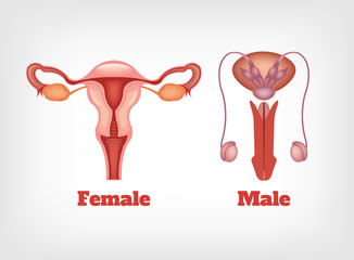 Man and woman reproductive system.