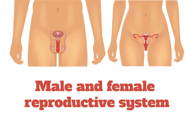 Man and woman reproductive system