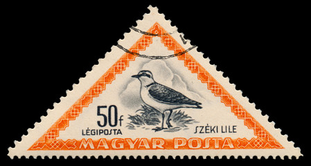 Stamp printed in Hungary shows Kentish plover