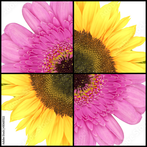 Foto op Canvas Madeliefjes Square collage of Sunflower and Gerbera