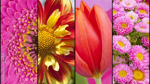 Deurstickers Dahlia Collage of red yellow and pink flowers
