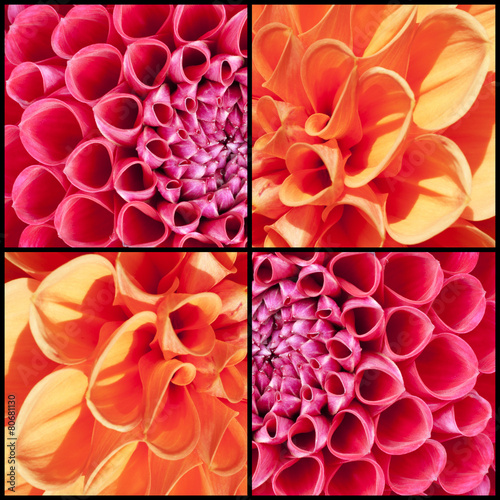 Aluminium Dahlia Square collage of orange and pink Dahlias